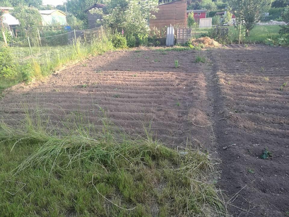 Vorbereitete Fläche für Gemüseanbau