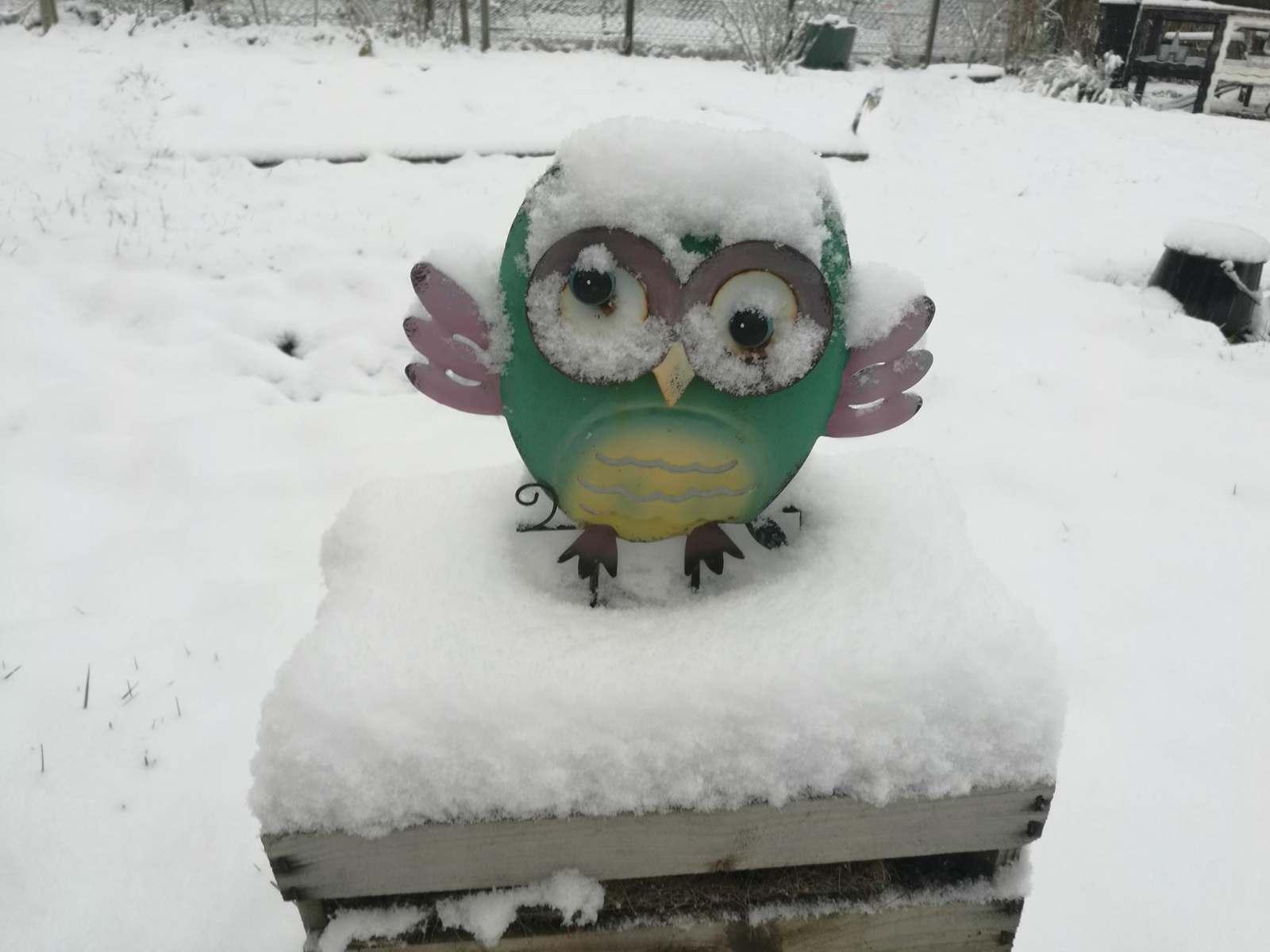Eule im Schnee