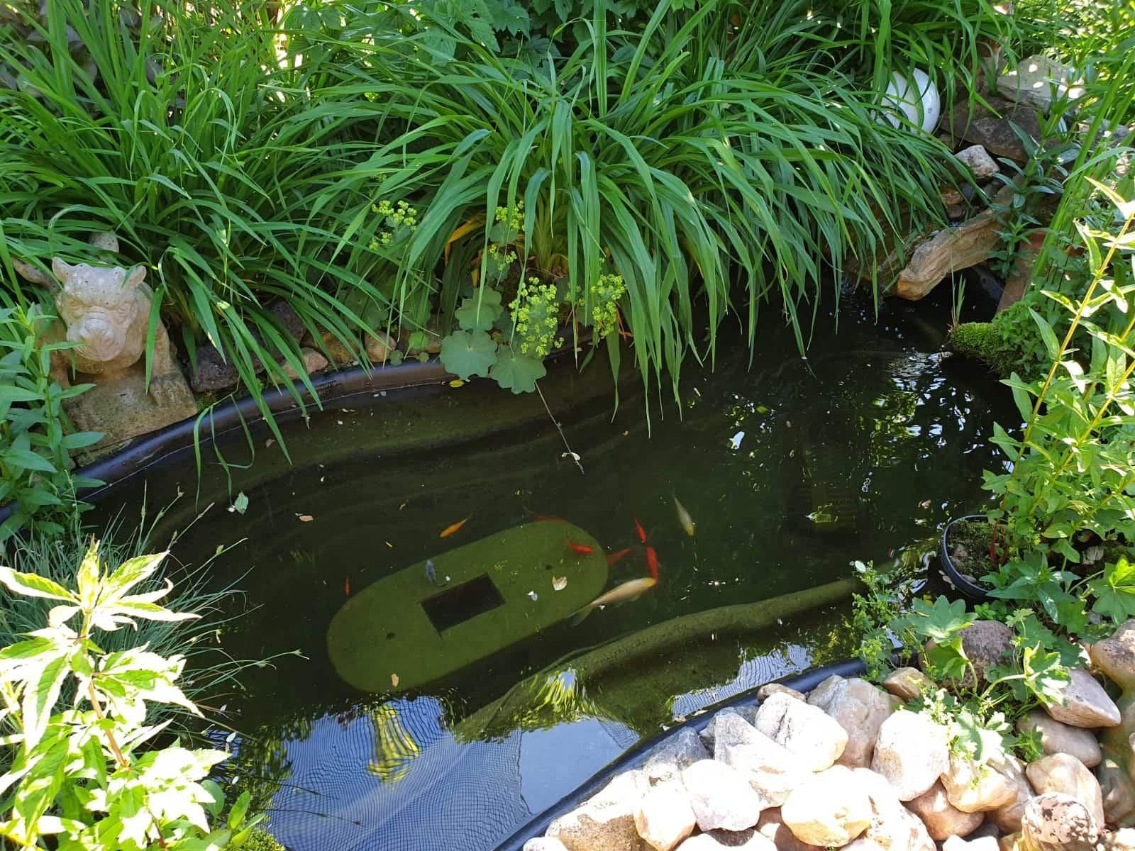 Auch ein Teich kann sein